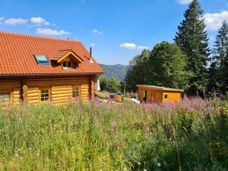 Ferienhaus Feldberg im Sommer